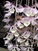 美麗花園 - 各種花草種植紀錄:DSCN7928_01.jpg