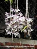 美麗花園 - 各種花草種植紀錄:DSCN7923_01.jpg