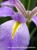 美麗花園 - 各種花草種植紀錄:DSCN0892_01.jpg