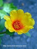 18-3 心花園:DSCN5514_1.jpg
