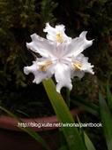 美麗花園 - 各種花草種植紀錄:DSCN0293_01.jpg