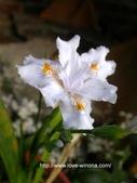 美麗花園 - 各種花草種植紀錄:DSCN0234_1.jpg