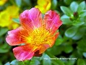 18-3 心花園:DSCN5513_01.jpg