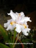 美麗花園 - 各種花草種植紀錄:DSCN0269_01.jpg