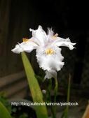 美麗花園 - 各種花草種植紀錄:DSCN0274_01.jpg