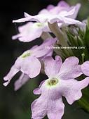 18-3 心花園:DSCN6610_01.jpg