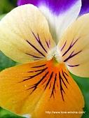 18-3 心花園:DSCN6670_01.jpg