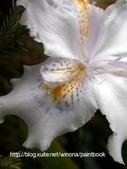 美麗花園 - 各種花草種植紀錄:DSCN0290_01.jpg