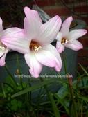 風雨蘭品種紀錄:DSCN0914_01.jpg