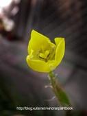 美麗花園 - 各種花草種植紀錄:DSCN2710_01.jpg