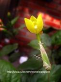 美麗花園 - 各種花草種植紀錄:DSCN2702_01.jpg