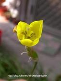 美麗花園 - 各種花草種植紀錄:DSCN2709_01.jpg
