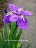 美麗花園 - 各種花草種植紀錄:DSCN4254_01.jpg