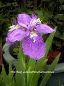 美麗花園 - 各種花草種植紀錄:DSCN4257_01.jpg