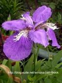 美麗花園 - 各種花草種植紀錄:DSCN4244_01.jpg