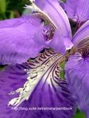 美麗花園 - 各種花草種植紀錄:DSCN4245_01.jpg