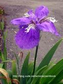 美麗花園 - 各種花草種植紀錄:DSCN4248_01.jpg