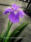 美麗花園 - 各種花草種植紀錄:DSCN4249_01.jpg
