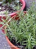 18-3 心花園:DSCN4944_01.jpg