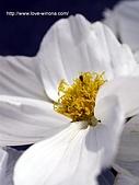 18-3 心花園:DSCN4979_01.jpg