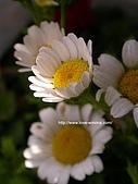 18-3 心花園:DSCN4982_01.jpg