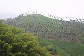 2009.05.23~05.24嘉義梅山、瑞里、奮起湖之旅:IMG_3709.JPG