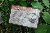 2009.05.23~05.24嘉義梅山、瑞里、奮起湖之旅:IMG_3734.JPG