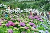 高家繡球花田萬里區:DSCF6299.jpg