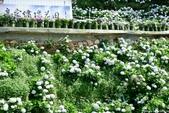 高家繡球花田萬里區:DSCF6338.jpg