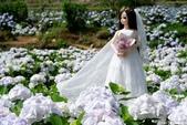 高家繡球花田萬里區:DSCF6342.jpg