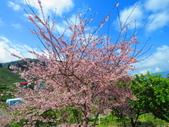 2020.03.15福壽山農場千櫻園:IMG_3299.JPG