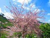 2020.03.15福壽山農場千櫻園:IMG_3300.JPG