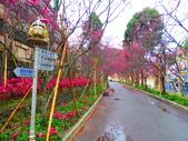 2019.03.09九族文化村櫻花祭:IMG_1205.JPG