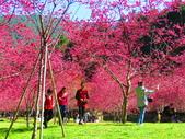 2021.02.15九族文化村:IMG_4886.JPG