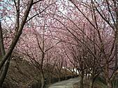 2011.02.18櫻花密境-武陵農場:DSCF0864.JPG