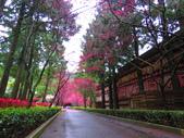 2019.03.09九族文化村櫻花祭:IMG_1217.JPG