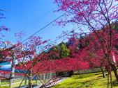 2021.02.15九族文化村:IMG_4753.JPG