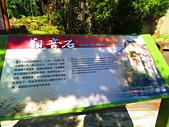2015.12.19嘉義大凍山國家森林步道:IMG_3514.JPG