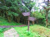 2019.05.19東眼山國家森林遊樂區:IMG_1953.JPG