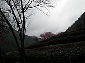 2011.02.18櫻花密境-武陵農場:DSCF0951.JPG