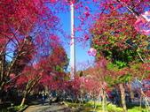 2021.02.15九族文化村:IMG_4755.JPG