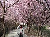 2011.02.18櫻花密境-武陵農場:DSCF0866.JPG