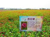 2020.03.21台南學甲老塘湖藝術村:IMG_3390.JPG