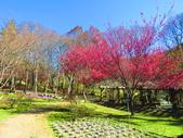 2019.02.01福壽山農場:IMG_0770.JPG