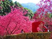2021.02.15九族文化村:IMG_4803.JPG