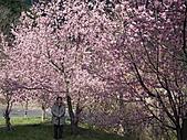 2011.02.18櫻花密境-武陵農場:DSCF0832.JPG