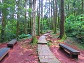 2019.05.19東眼山國家森林遊樂區:IMG_1962.JPG