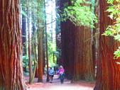 2019.03.12紐西蘭南北島之旅:北島紅木森林公園IMG_1767.JPG
