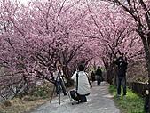 2011.02.18櫻花密境-武陵農場:DSCF0868.JPG