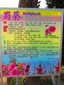 2014.03.08台南學甲蜀葵花祭: